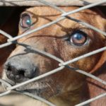 Facebook prohibe vender mascotas