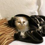 consejos para cuidar gatos en invierno