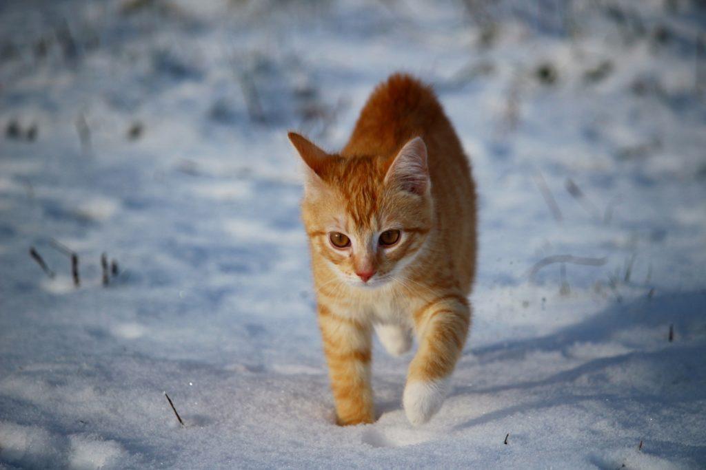 cuidados gatos en invierno