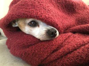 perros en invierno