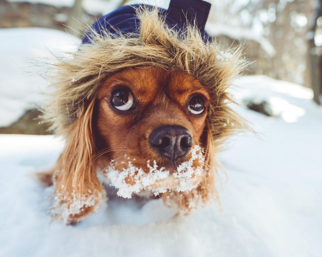 precauciones perros en invierno
