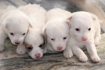 reino unido prohíbe la venta de perros y gatos en tiendas