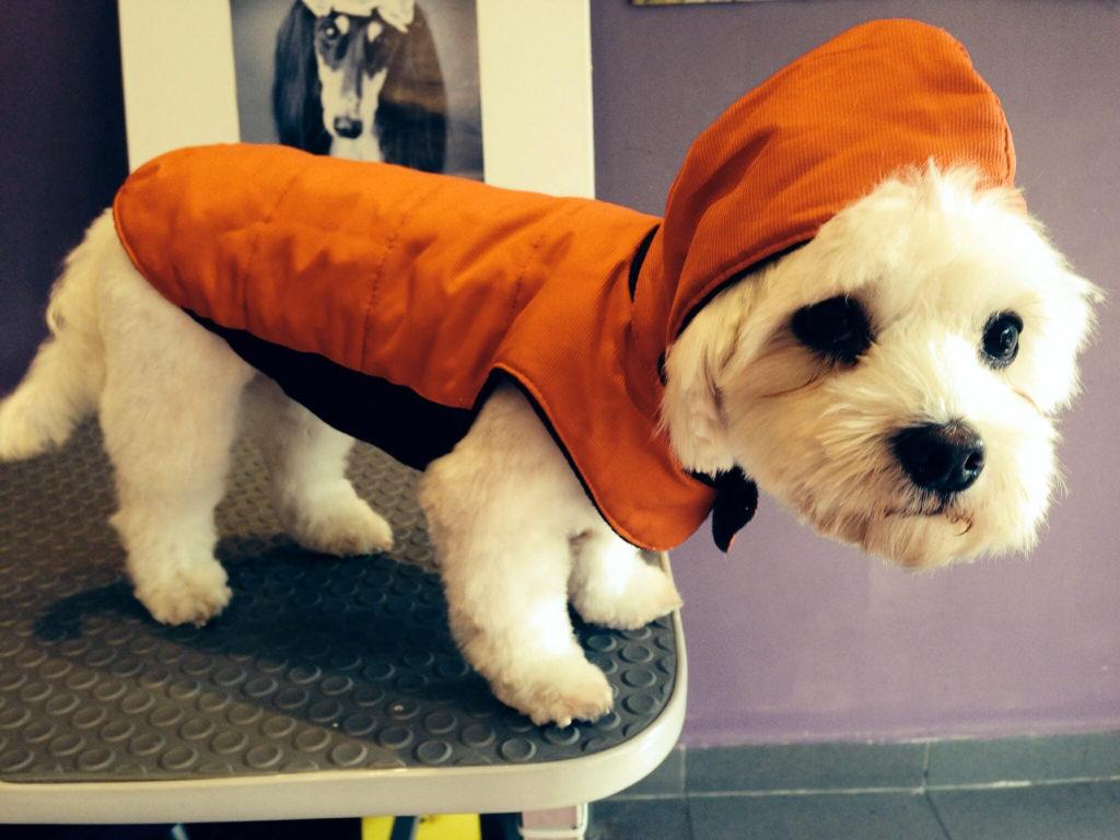 regalos para mascotas ropa