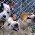 California no permite la venta de mascotas de criaderos