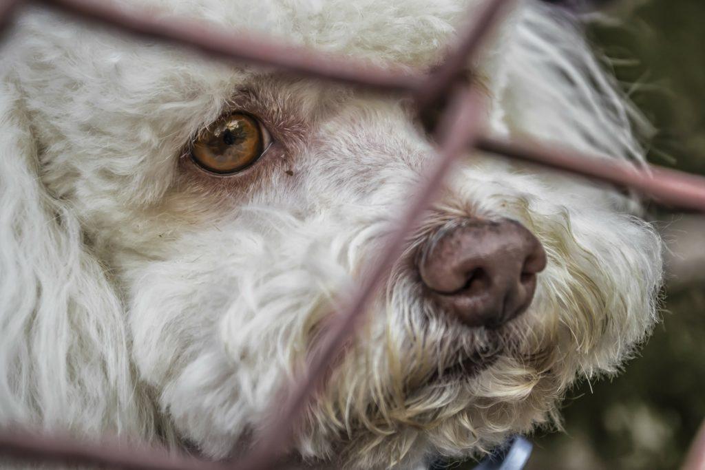 California vende solo animales de protectoras