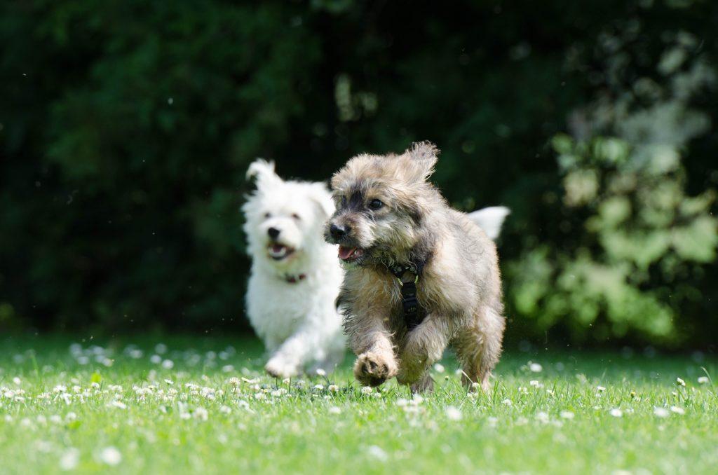 cómo es la amistad entre perros