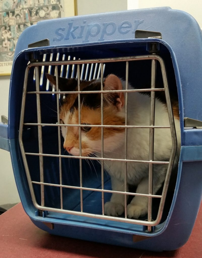cómo limpiar el transportín de tu mascota