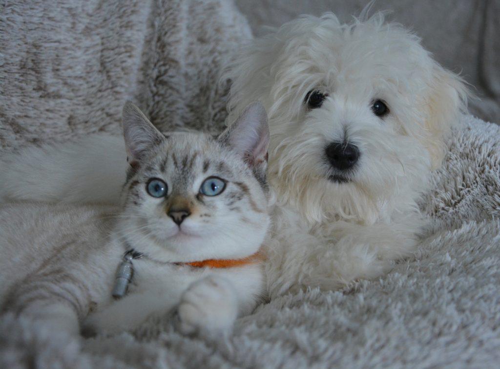 es cierto que perros y gatos se llavan mal