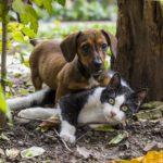es verdad que perros y gatos se llevan mal