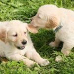 amistad entre perros