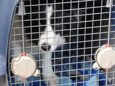 limpiar el transportín de tu mascota