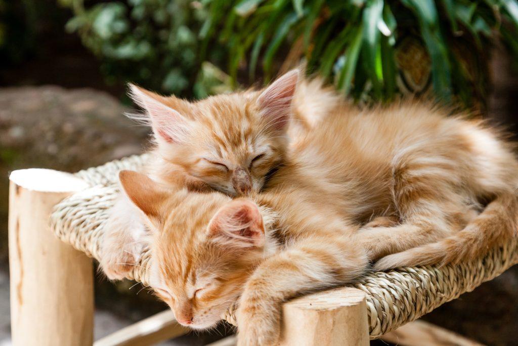 cuánto duerme un gato