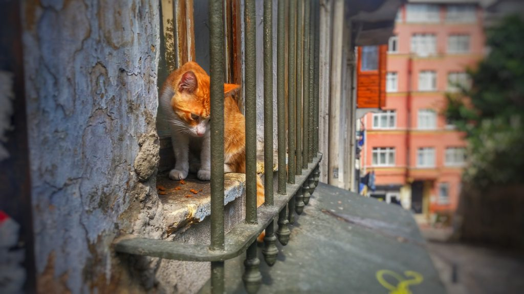 casas con balcones ventanas y gatos