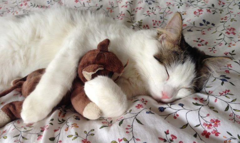 cómo duermen los gatos