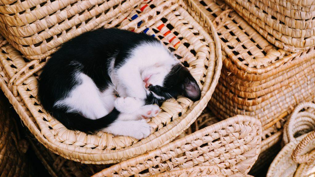 cómo duermen los gatos sueño felino