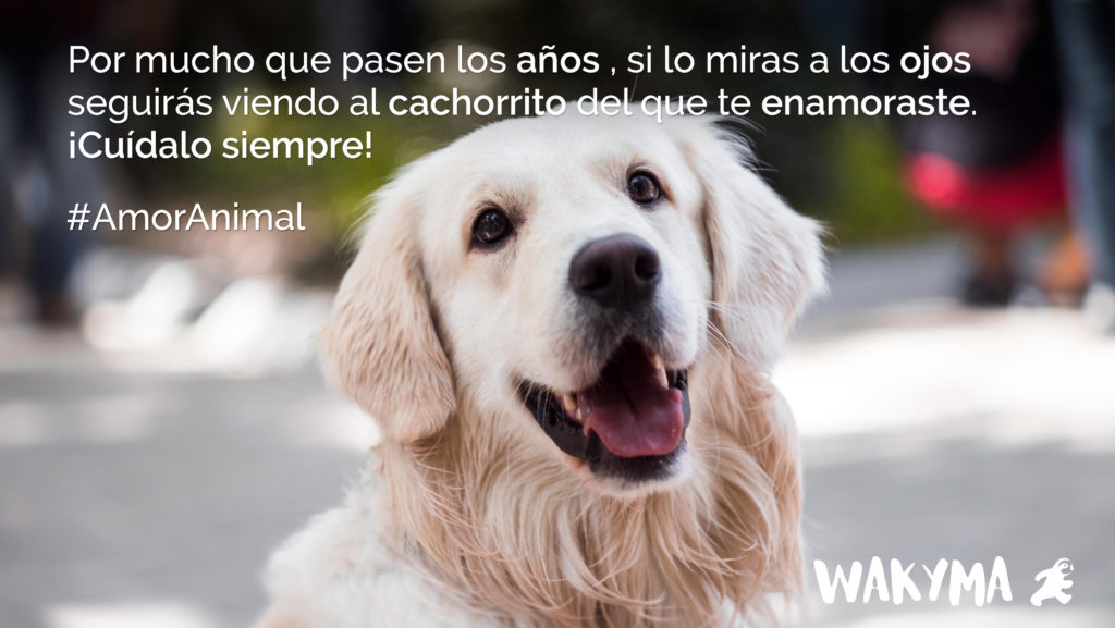 ama a tu mascota para siempre Wakyma