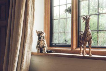 cuidado con ventanas y balcones si tienes gato
