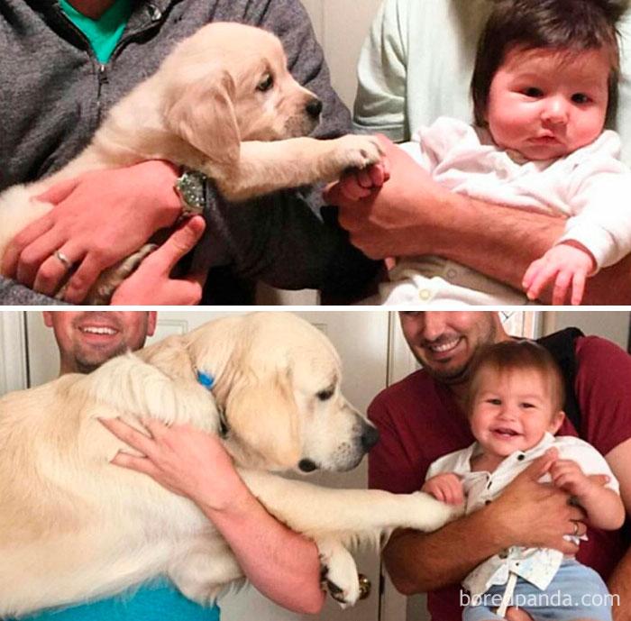 fotos antes y después de mascotas