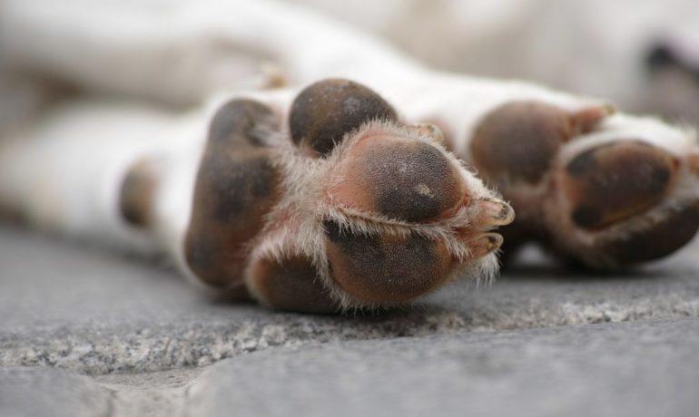 protege las almohadillas de tu perro del frío