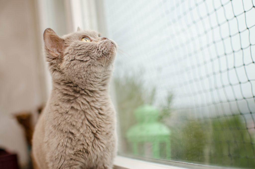 protege ventanas y balcones si tienes gato