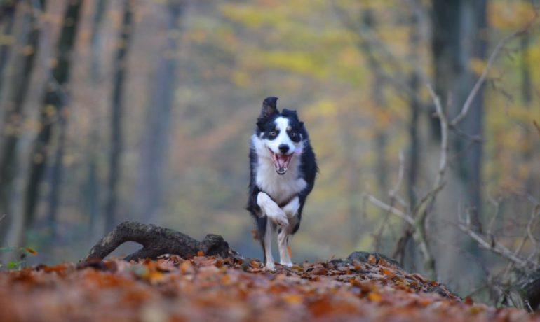 alimento para perros muy activos o deportistas