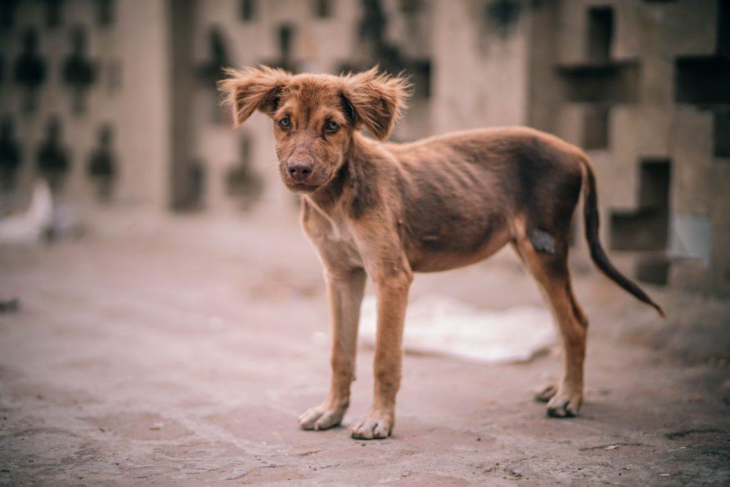 cuáles son los síntomas del moquillo en perros