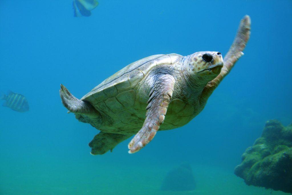 enfermedades del caparazón de las tortugas más frecuentes