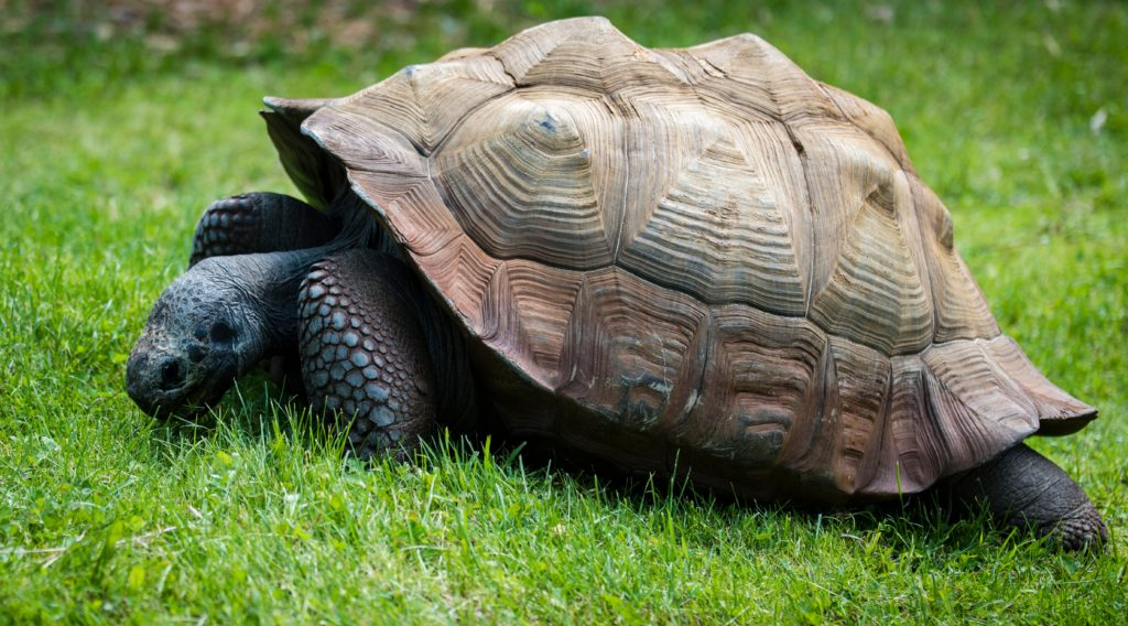enfermedades en el caparazón de la tortuga