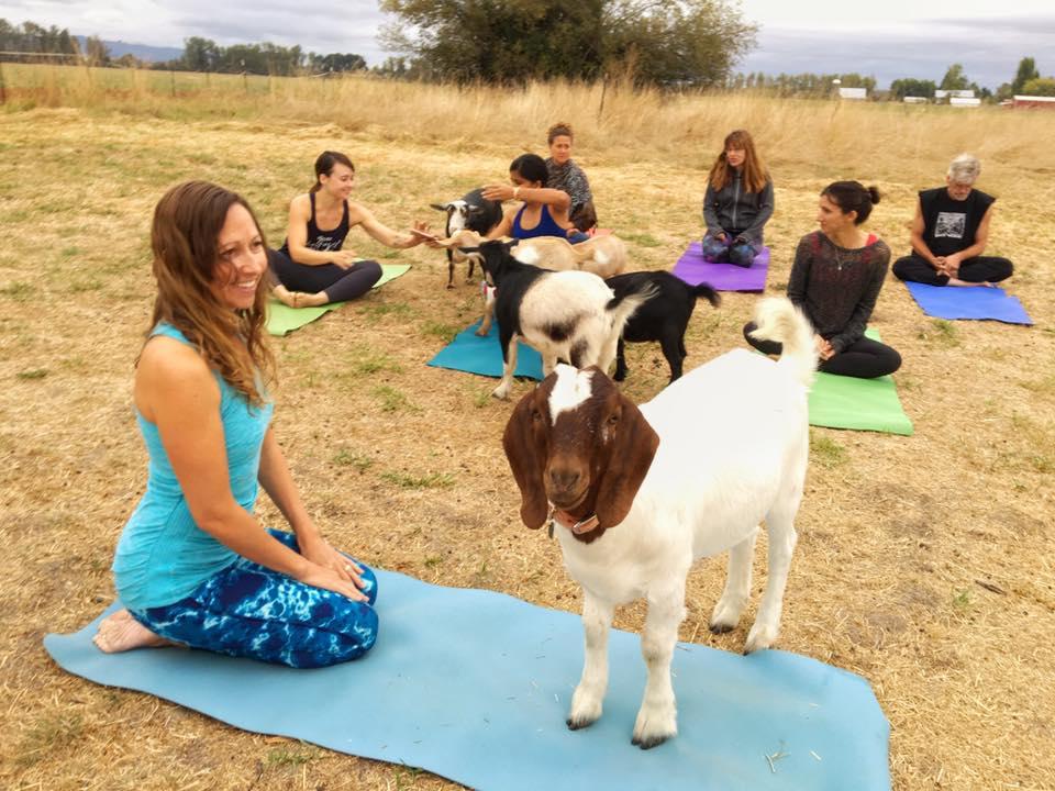 goat yoga o yoga con cabras