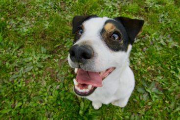 salud dental para perros