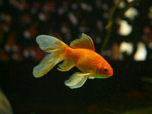 condenado por abandonar a su pez
