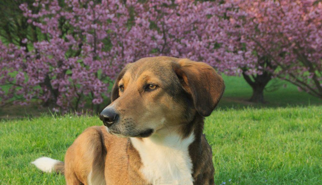 cambios de los perros en primavera
