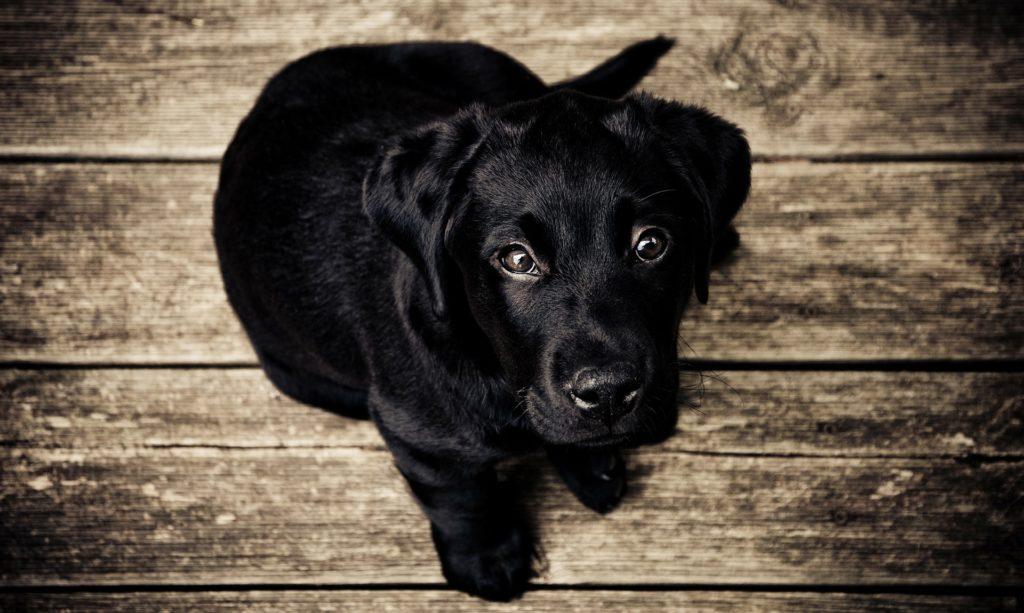 motivos por los que no hay que gritar al perro