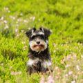 los perros en primavera