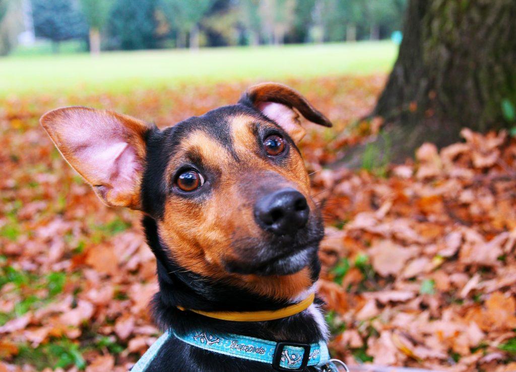 collares localizadores para perros