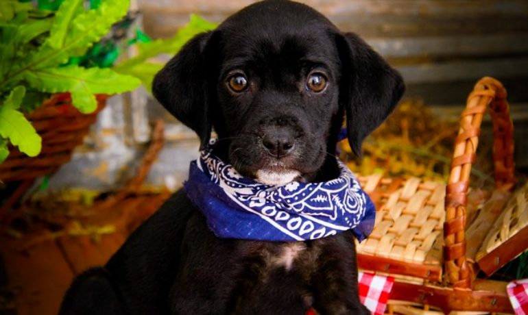 eglas que debes seguir si vas con tu mascota a un lugar pet-friendly