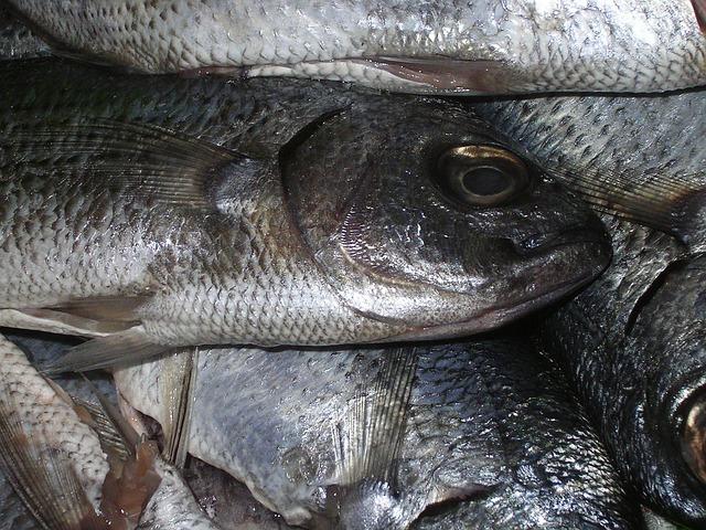 alimentos tóxicos para gatos pescado crudo