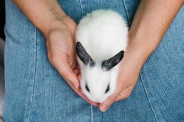 bañar a un conejo