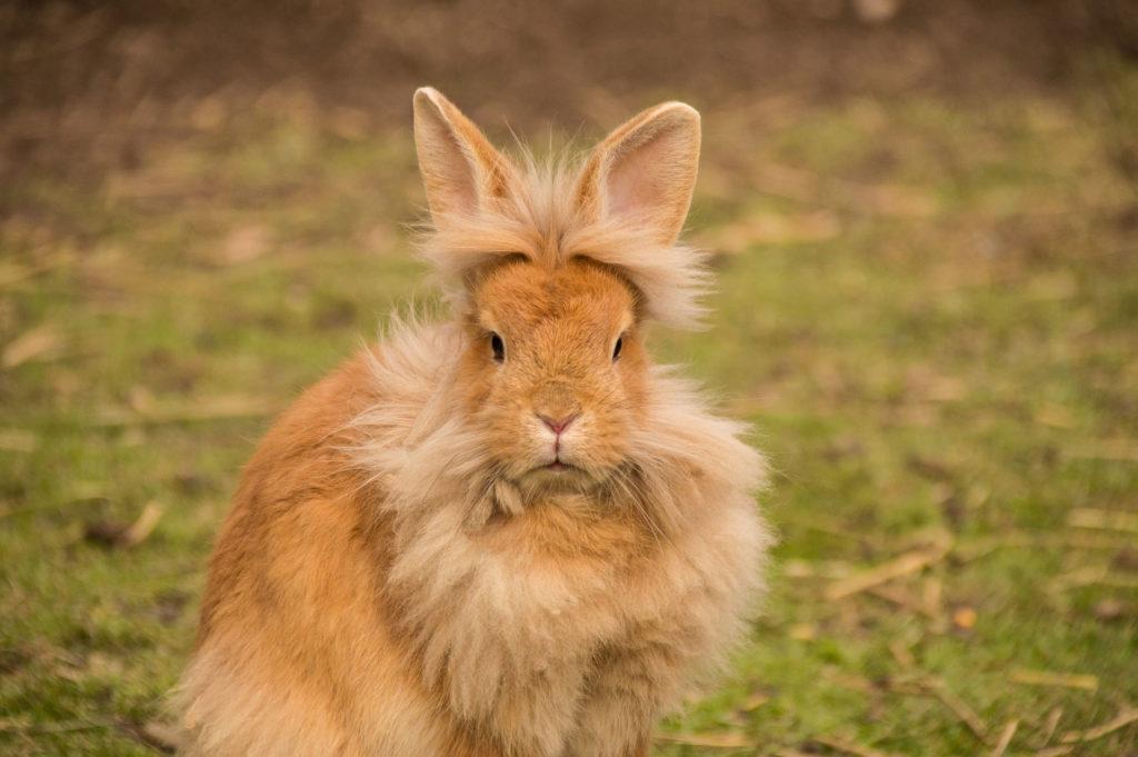 consejos para tener un conejo como animal domestico