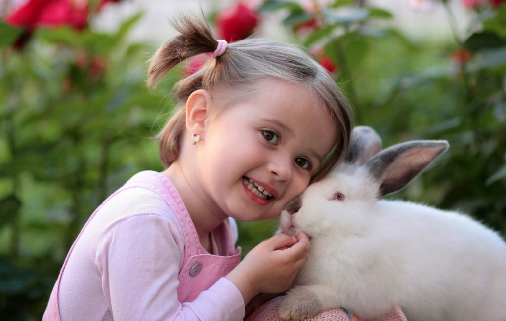 consejos para tener un conejo en casa