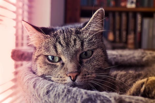 cosas que los gatos odian