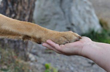 cuidados de las patas del perro