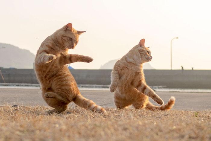 fotos de gatos bailando