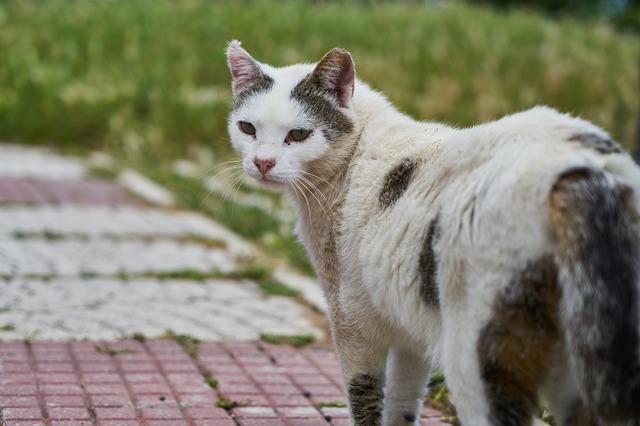 vacuna triple felina o vacuna trivalente felina