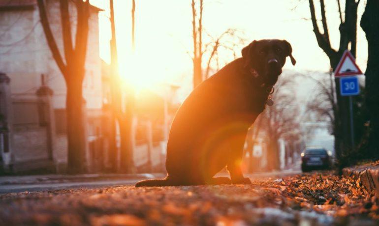 la contaminación afecta a las mascotas