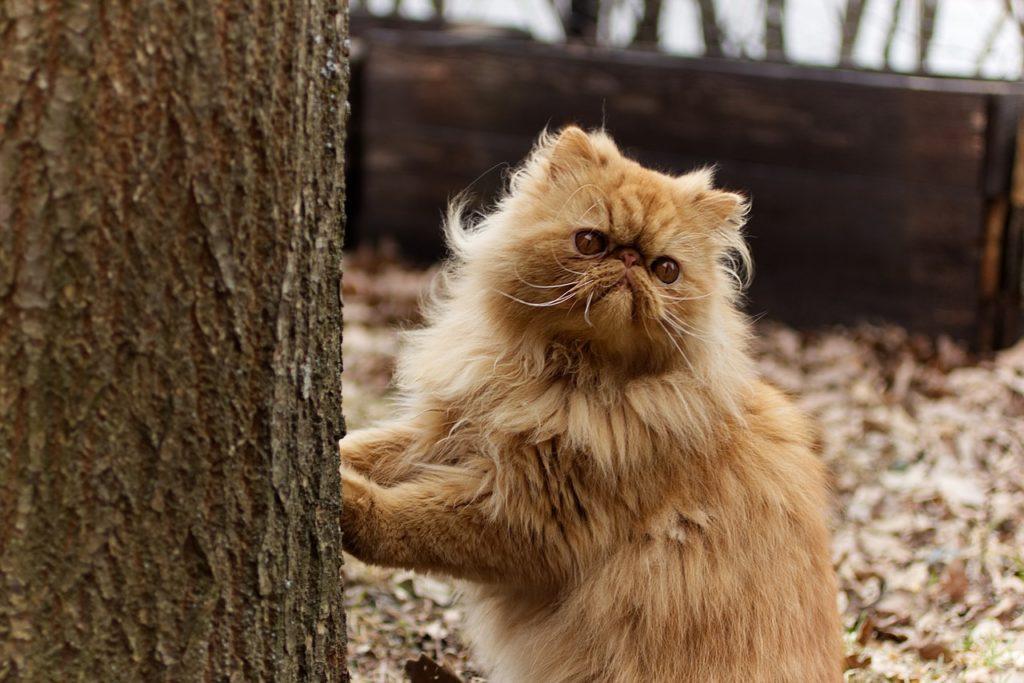 la contaminación afecta a las mascotas y su olfato
