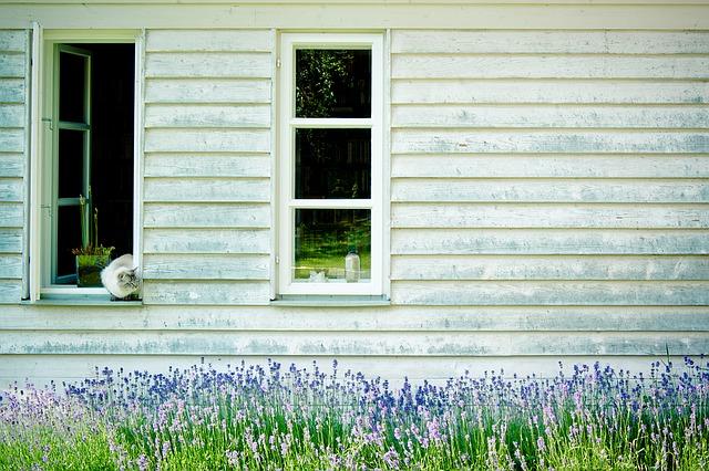 remedios caseros para acabar con las pulgas en casa