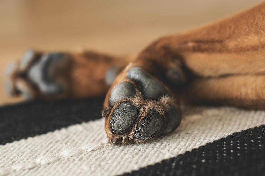 los cuidados de las patas del perro