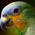 los problemas en el pico de las aves
