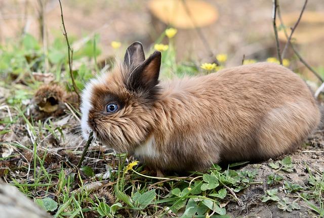 higiene de los conejos